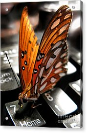 Acrylic Print featuring the photograph Butterfly Home At 7 by Jennie Breeze