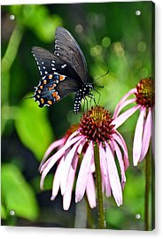 Butterfly In Black Acrylic Print