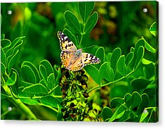 Butterfly In Paradise Acrylic Print