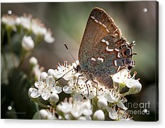 Butterfly In The Garden Acrylic Print