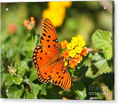 Butterfly In The Glades - Gulf Fritillary Acrylic Print by Christiane Schulze Art And Photography