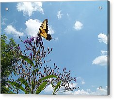 Acrylic Print featuring the photograph Butterfly In The Wild by Eric Switzer