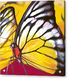 Butterfly - Insect Stylised Pop Art Drawing Potrait Poser Acrylic Print by Kim Wang