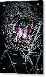 Butterfly Acrylic Print by Joana Kruse