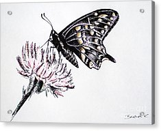 Butterfly Acrylic Print by Katharina Filus