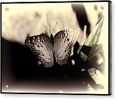 Butterfly Kisses Acrylic Print by Oscar Alvarez Jr
