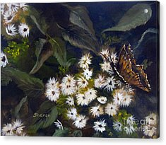 Butterfly Kisses Acrylic Print by Sharon Burger