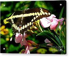 Acrylic Print featuring the photograph Butterfly by Kristine Merc