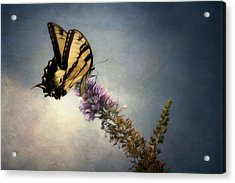 Butterfly Landing Acrylic Print