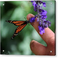 Acrylic Print featuring the photograph Butterfly by Leticia Latocki