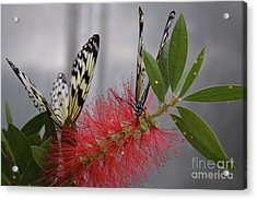 Acrylic Print featuring the photograph Butterfly Love by Carla Carson