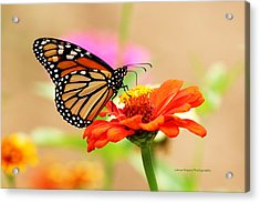Butterfly Lunch Acrylic Print