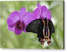 Butterfly Magic Acrylic Print