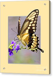 Acrylic Print featuring the photograph Butterfly by Mariarosa Rockefeller