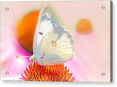 Butterfly Acrylic Print by Marion Johnson