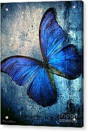 Butterfly Acrylic Print by Mark Ashkenazi