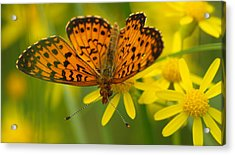 Acrylic Print featuring the photograph Butterfly by James Peterson