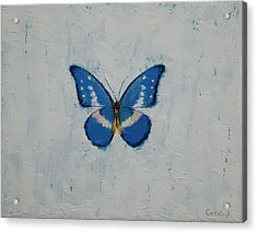 Butterfly Acrylic Print by Michael Creese