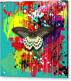 Butterfly Montage Acrylic Print by Gary Grayson