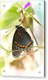 Butterfly Nursery Acrylic Print by Jon Woodhams