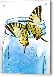 Butterfly On A Blue Jar Acrylic Print by Bob Orsillo