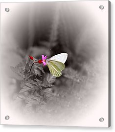 Butterfly On A Pink Flower Acrylic Print