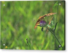 Butterfly On Clover Acrylic Print