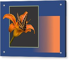 Butterfly On Day Lily Acrylic Print by Larry Capra