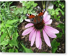 Acrylic Print featuring the photograph Butterfly On Echinacea by Helene U Taylor