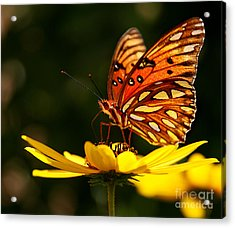 Butterfly On Flower Acrylic Print by Joan McCool