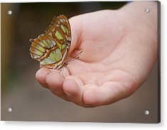 Acrylic Print featuring the photograph Butterfly On Hand by Leticia Latocki