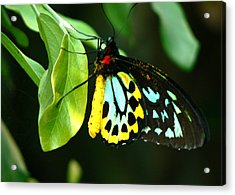 Butterfly On Leaf Acrylic Print by Laurel Powell