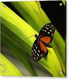 Butterfly On Leaves Acrylic Print by Art Block Collections