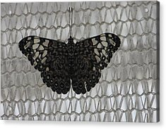 Acrylic Print featuring the photograph Butterfly On Net by Bill Woodstock