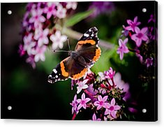 Butterfly On Penta Acrylic Print