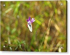 Butterfly On Purple 1.2608 Acrylic Print by Stephen Parker