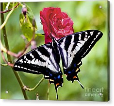 Butterfly On Rose Acrylic Print