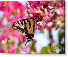 Butterfly On The Crepe Myrtle. Acrylic Print