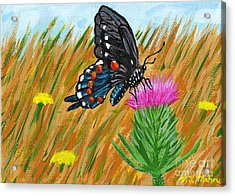 Butterfly On Thistle Acrylic Print by Vicki Maheu