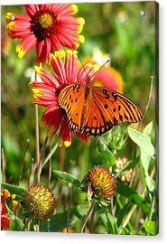 Butterfly One Acrylic Print by Peggy Burley