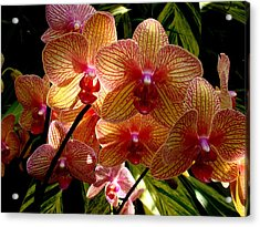Acrylic Print featuring the photograph Butterfly Orchids by Rodney Lee Williams