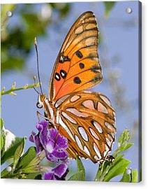 Butterfly Acrylic Print by Paulette Moran Dalton