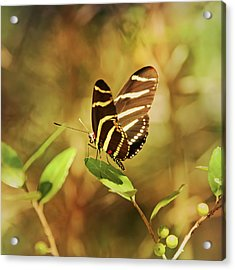 Butterfly Pausing On Leaf Acrylic Print