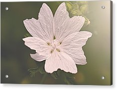 Butterfly Petals Acrylic Print