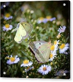 Butterfly Moments  Acrylic Print by Kerri Farley
