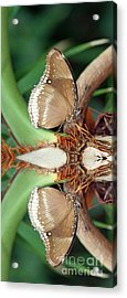 Butterfly Reflection Acrylic Print by Karen Adams