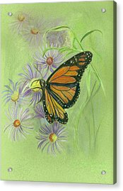 Butterfly Acrylic Print by Ruth Seal