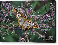 Acrylic Print featuring the photograph Butterfly Soft Landing by Thomas Woolworth