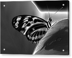 Butterfly Solarized Acrylic Print by Ron White