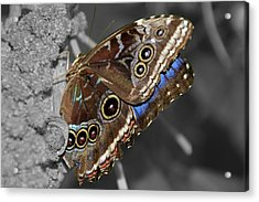 Butterfly Spot Color 1 Acrylic Print